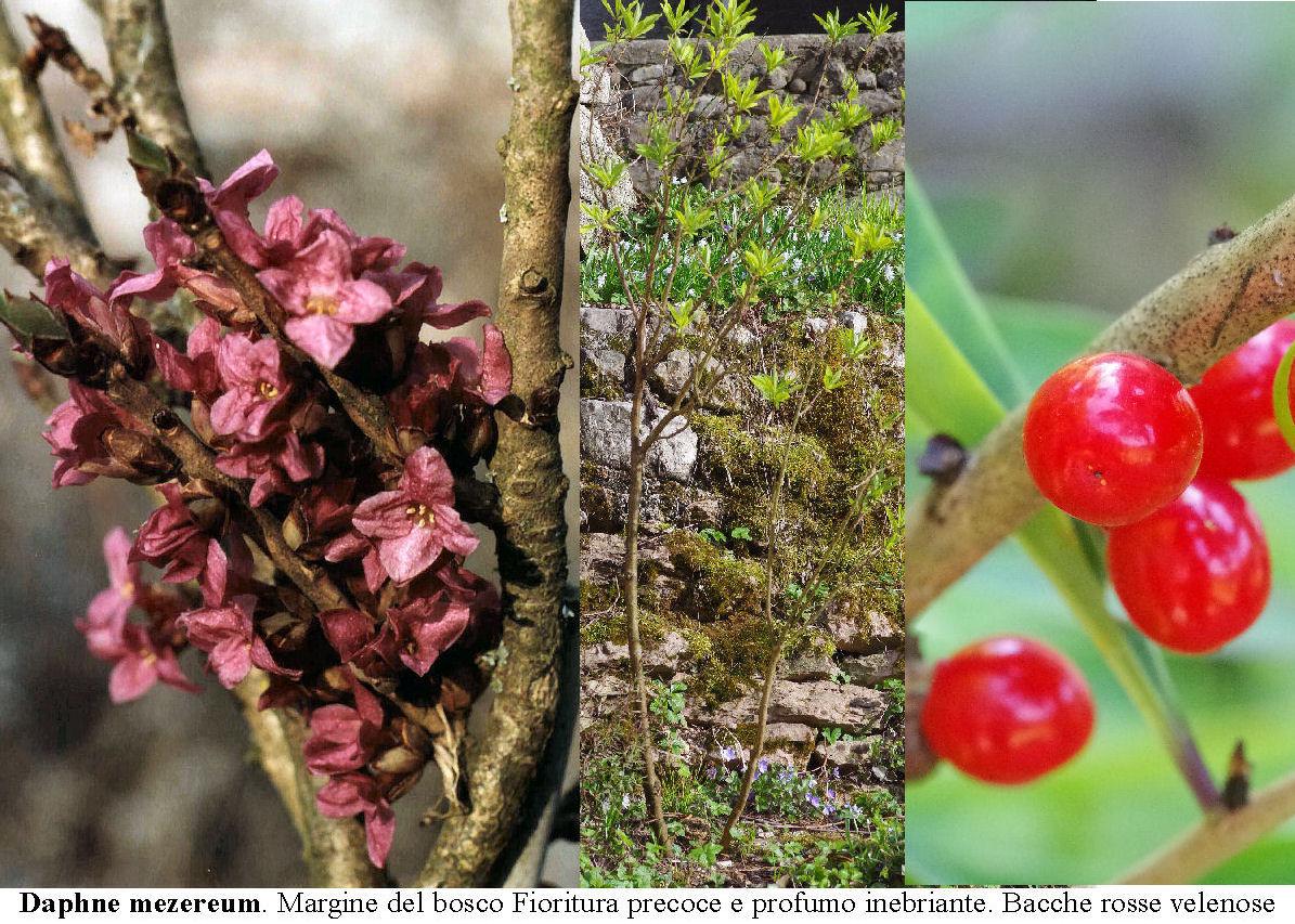 Albero Con Bacche Rosse gli arbusti